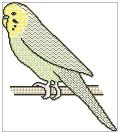 Blackwork Budgie